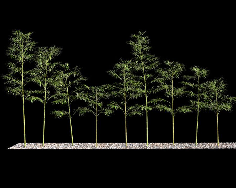 Bambusbäume 4 royalty-free 3d model - Preview no. 7