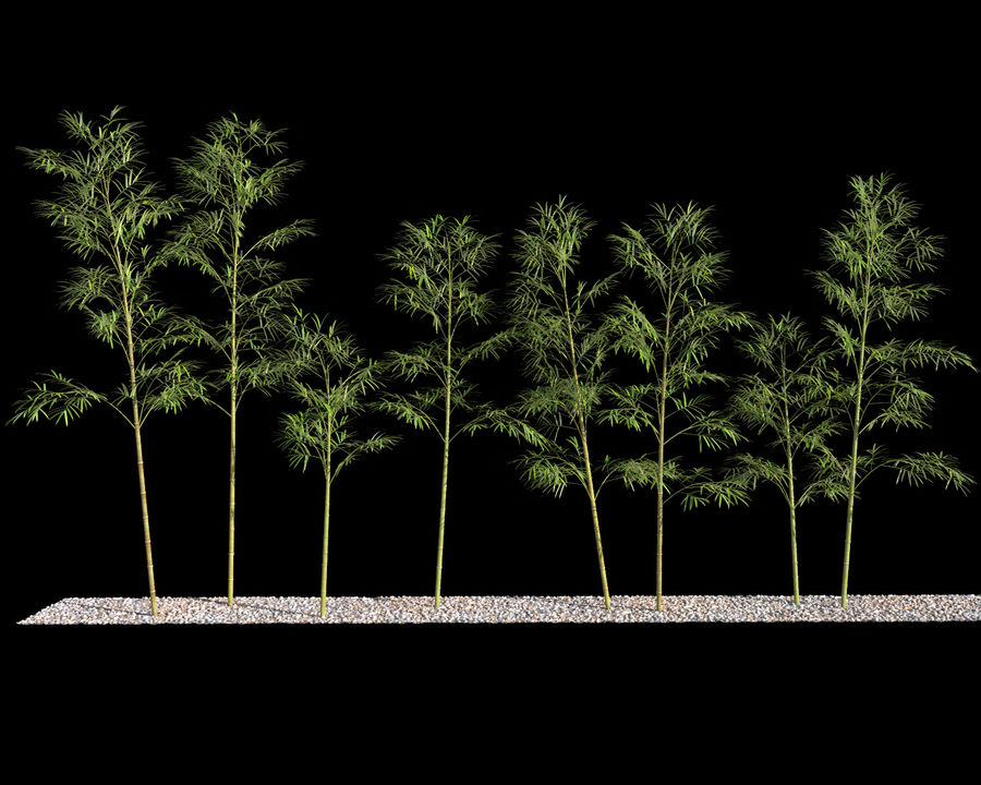 Bamboo Trees 4 (+ GrowFX) royalty-free modelo 3d - Preview no. 6