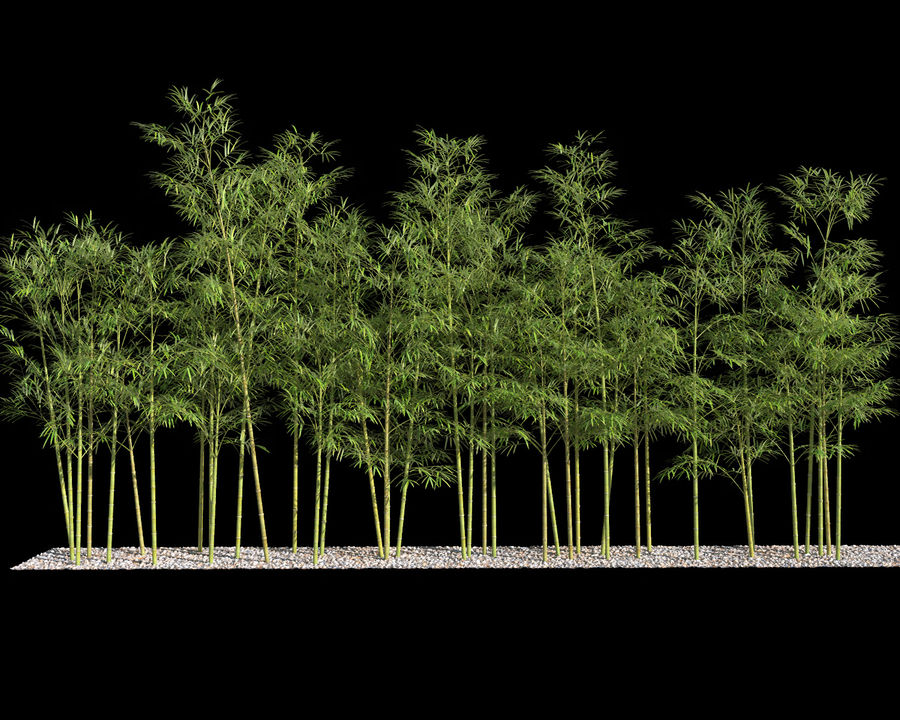 Bamboo Trees 4 (+ GrowFX) royalty-free modelo 3d - Preview no. 4