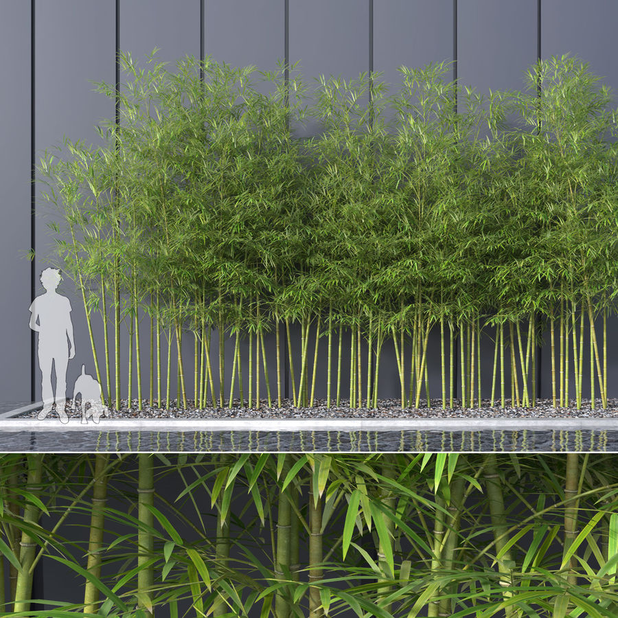 Bamboo Trees 4 (+ GrowFX) royalty-free modelo 3d - Preview no. 1