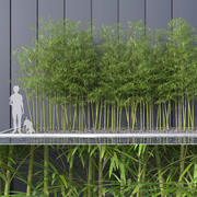 Bamboo Trees 4 (+ GrowFX) modelo 3d