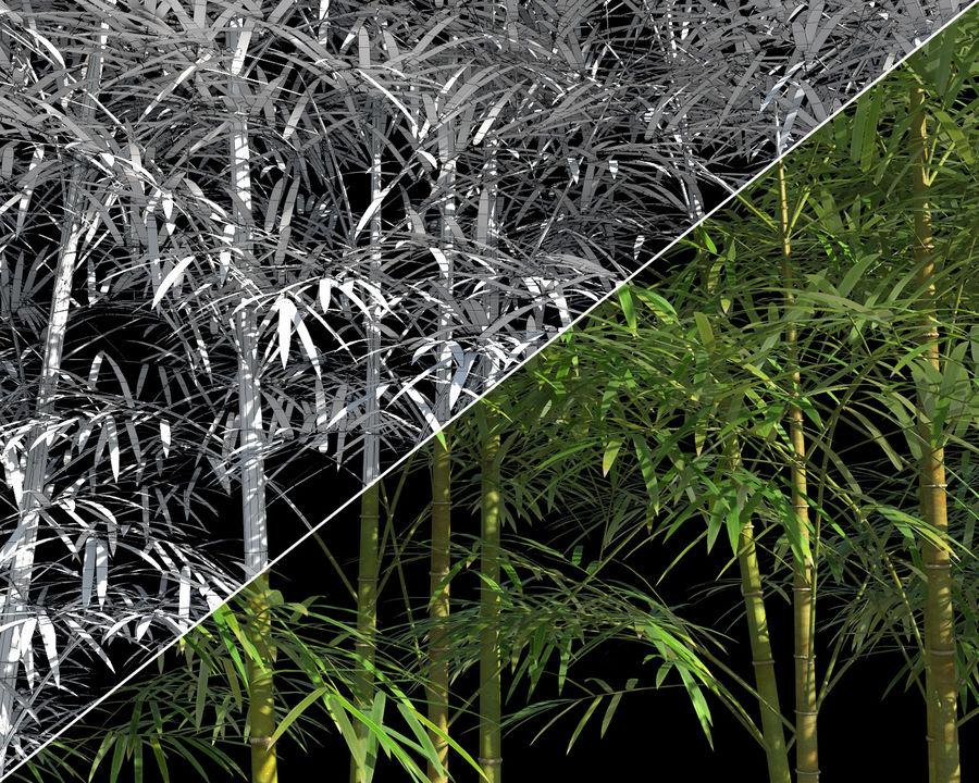 대나무 나무 4 (+ GrowFX) royalty-free 3d model - Preview no. 10