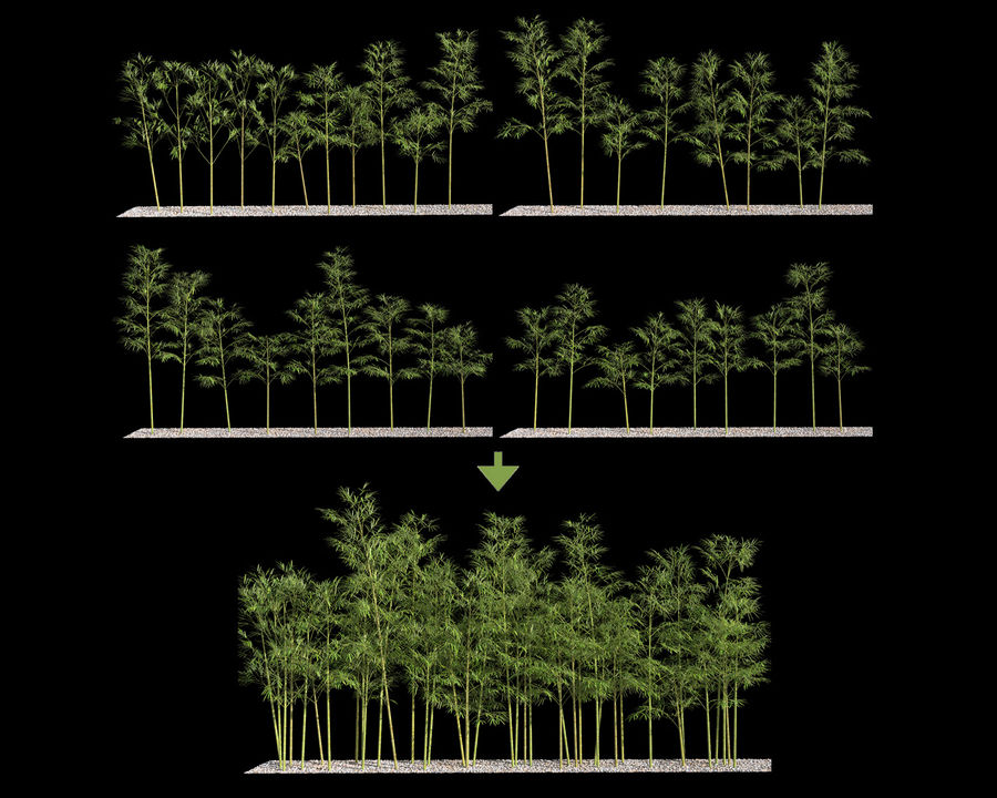 Bamboo Trees 4 (+ GrowFX) royalty-free modelo 3d - Preview no. 3