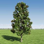 Magnolia tree (2) 3d model