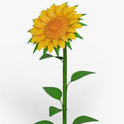 Cartoon Sunflower 3d model