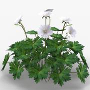 Geranium Perennial 3d model