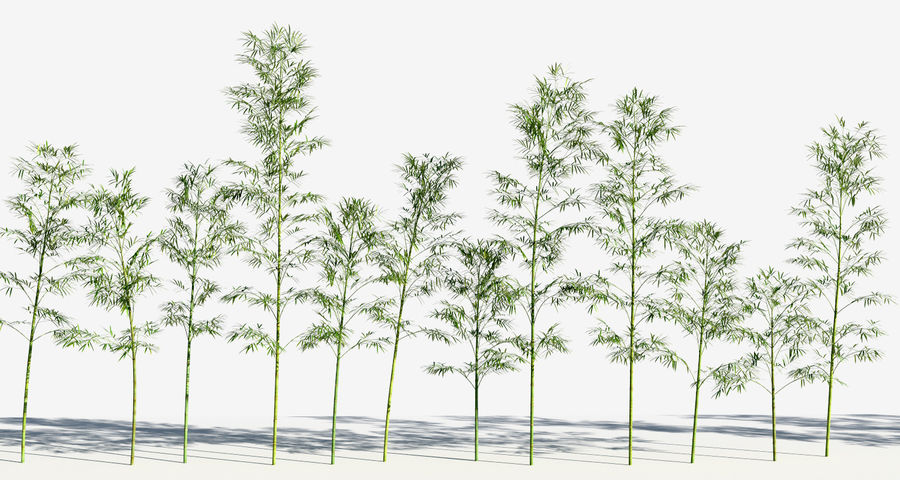 Bamboo Trees 3 (+GrowFX) royalty-free 3d model - Preview no. 9
