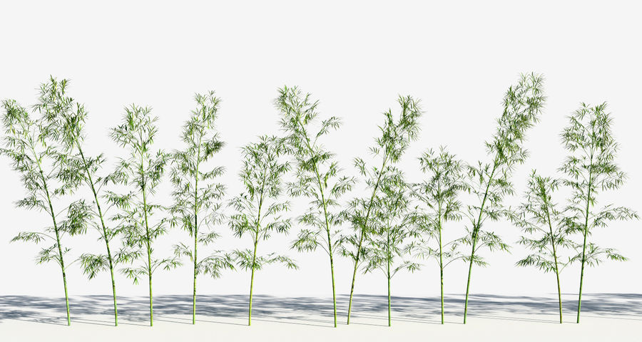 Bamboo Trees 3 (+GrowFX) royalty-free 3d model - Preview no. 7