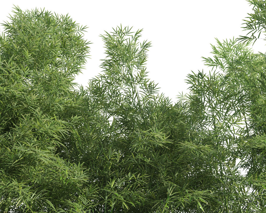Bamboo Trees 3 (+GrowFX) royalty-free 3d model - Preview no. 12
