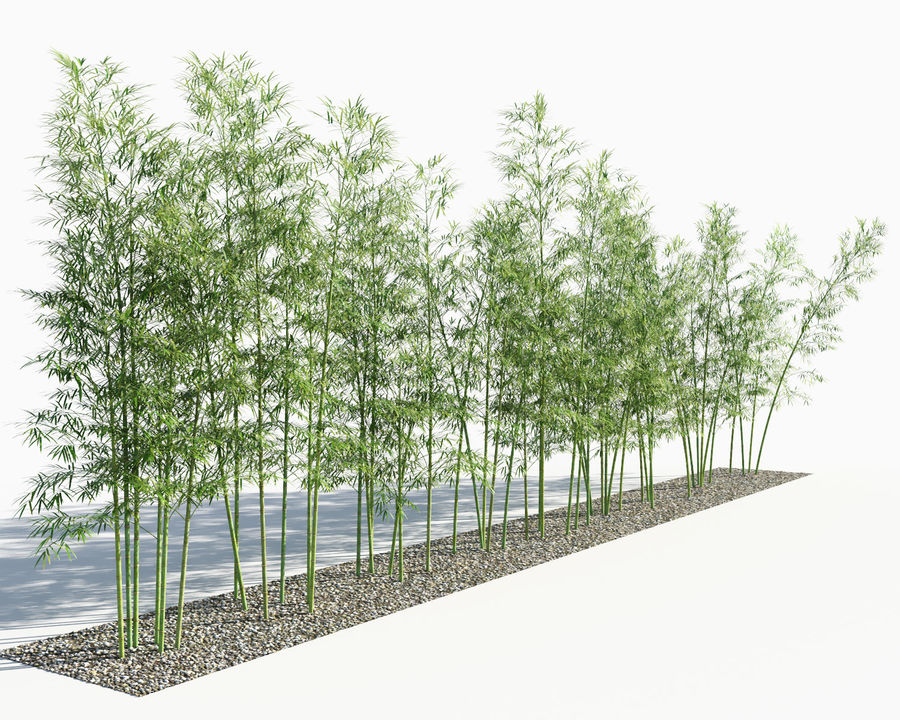Árvores de bambu 3 (+ GrowFX) royalty-free 3d model - Preview no. 2