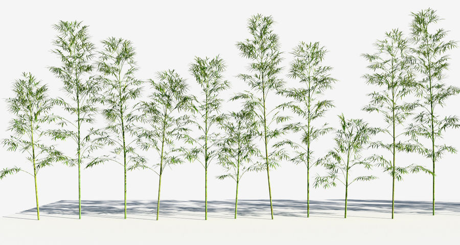 Bamboo Trees 3 (+GrowFX) royalty-free 3d model - Preview no. 6