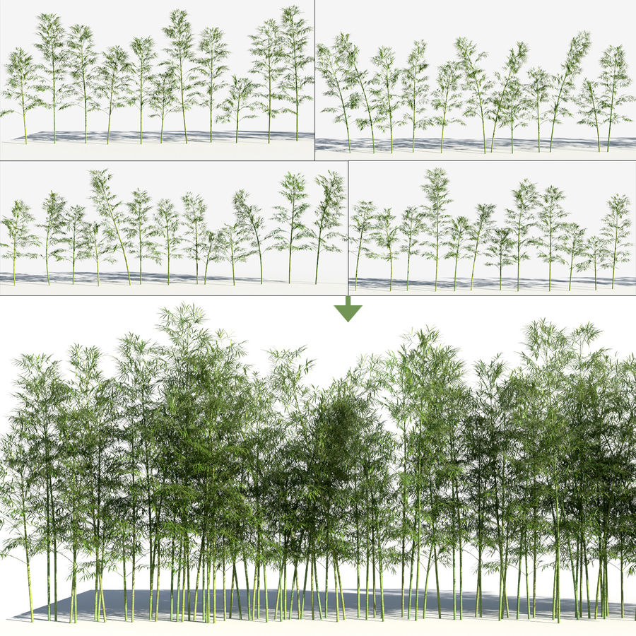 Bamboo Trees 3 (+GrowFX) royalty-free 3d model - Preview no. 3