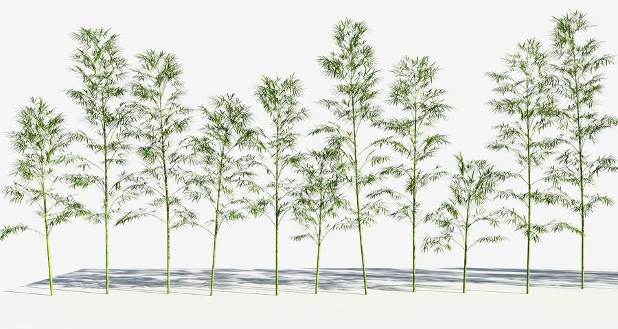 Árvores de bambu 3 (+ GrowFX) royalty-free 3d model - Preview no. 6