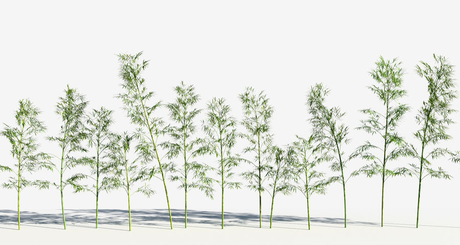 Bamboo Trees 3 (+GrowFX) royalty-free 3d model - Preview no. 8