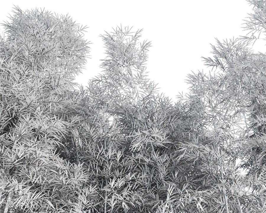 Árvores de bambu 3 (+ GrowFX) royalty-free 3d model - Preview no. 13