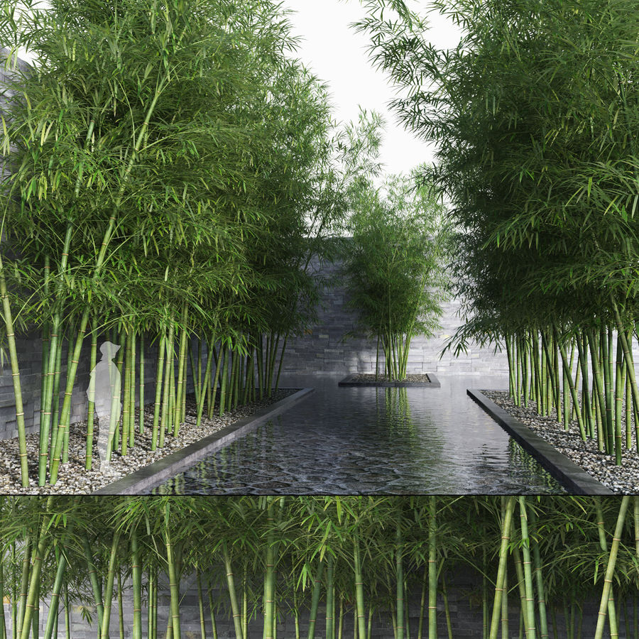 Bamboo Trees 3 (+GrowFX) royalty-free 3d model - Preview no. 1