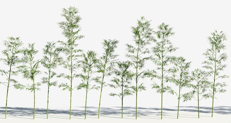 Árvores de bambu 3 (+ GrowFX) royalty-free 3d model - Preview no. 9