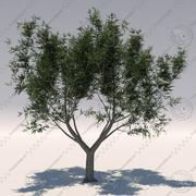Olive tree 1(Olea europaea) 3d model