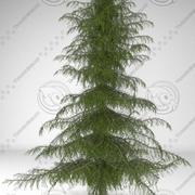 삼나무 3d model