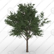 Bucida Buceras tree 3d model