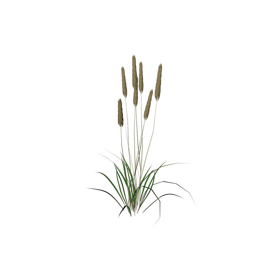 Planta de trigo royalty-free 3d model - Preview no. 5