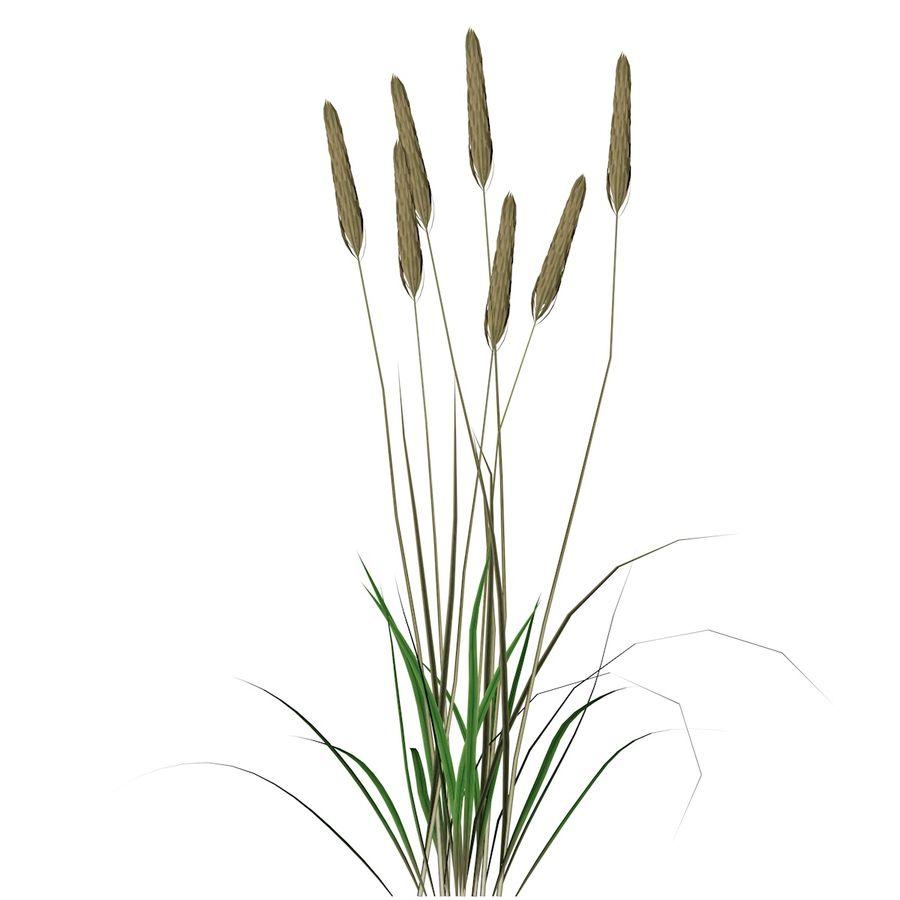 Planta de trigo royalty-free 3d model - Preview no. 4