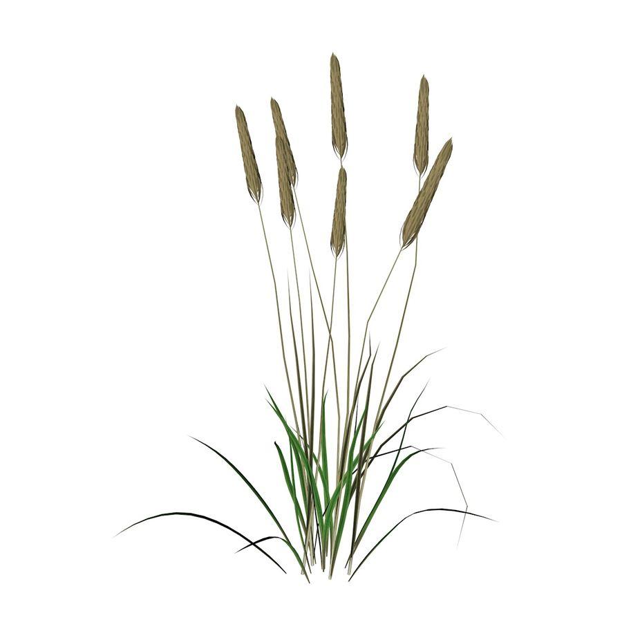 Planta de trigo royalty-free 3d model - Preview no. 1