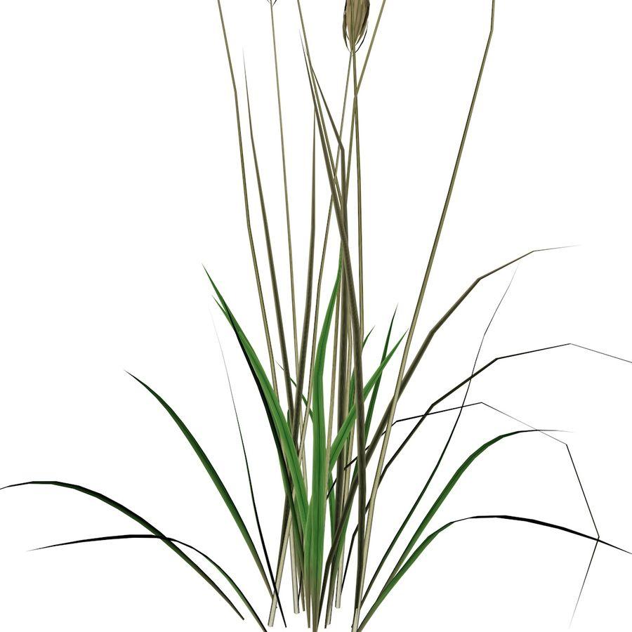 Planta de trigo royalty-free 3d model - Preview no. 3