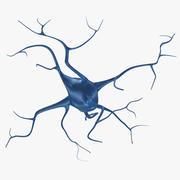 Neurons(1) 3d model