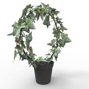Roślina bluszczu 3d model