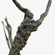 樹幹RAW&間引き3DスキャンKA02 3d model