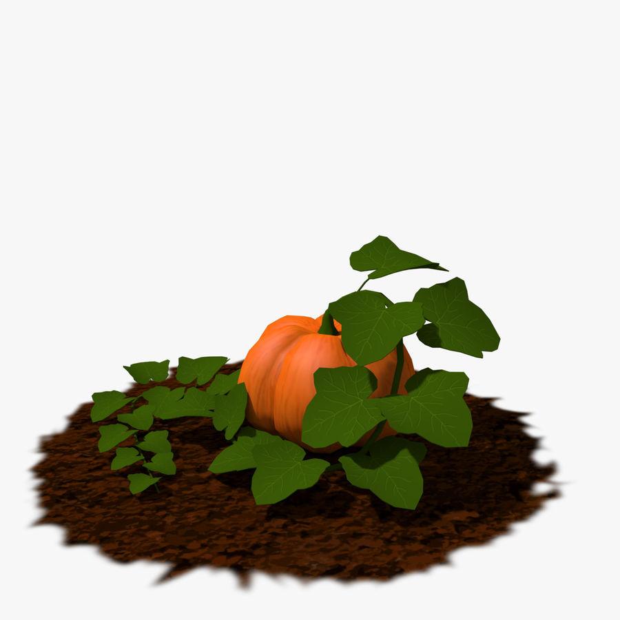 Pumpkin Plant royalty-free 3d model - Preview no. 2