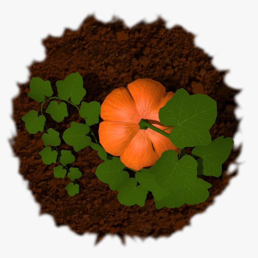 Pumpkin Plant royalty-free 3d model - Preview no. 3