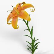 Cartoon Lily 3d model