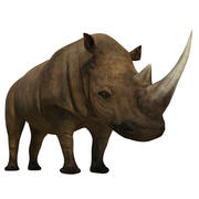 Nosorożec 3d model