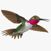 Broad Tailed Hummingbird Flying Pose 3d model