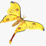 Comet Moth 3D Model 3d model