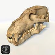 urso crânio (simples) baixo poli 3d model