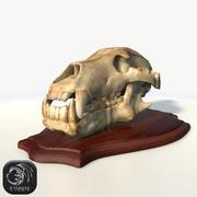 Bear skull (advanced) low poly 3d model