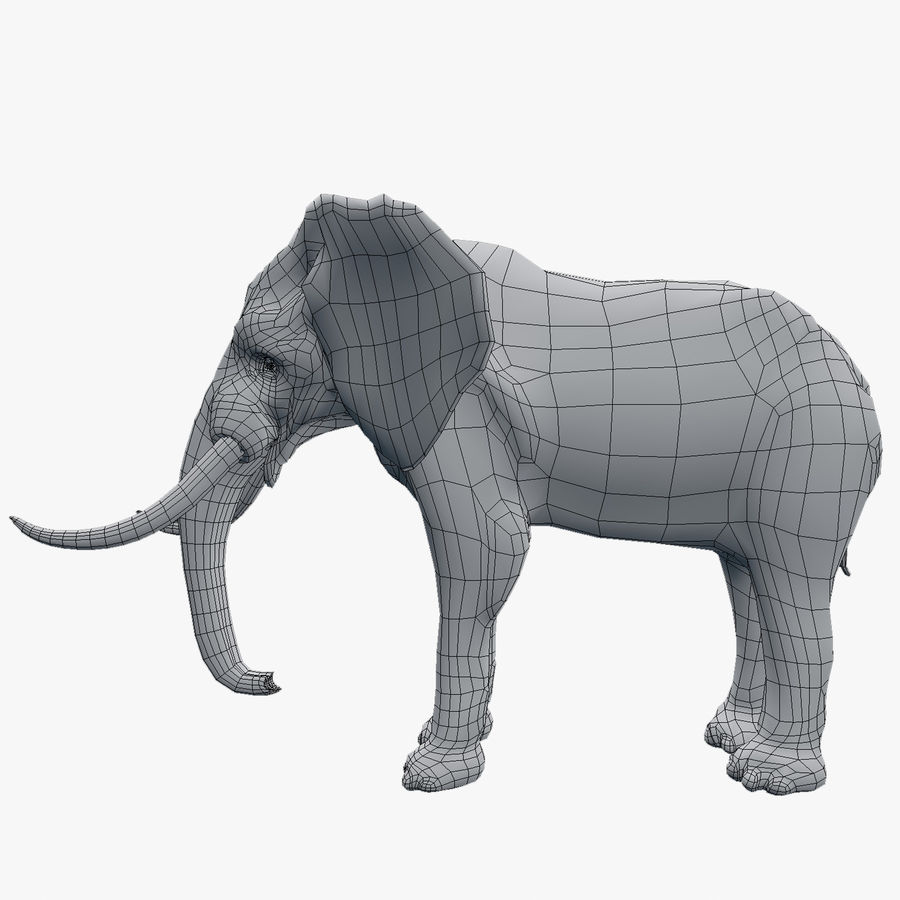 elephant african royalty-free 3d model - Preview no. 2