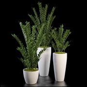 zz Pflanzen gesetzt 3d model