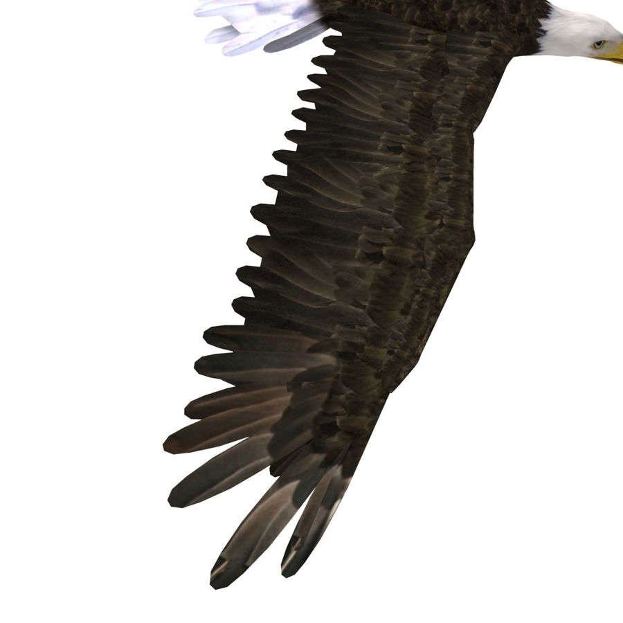 Eagle royalty-free 3d model - Preview no. 16