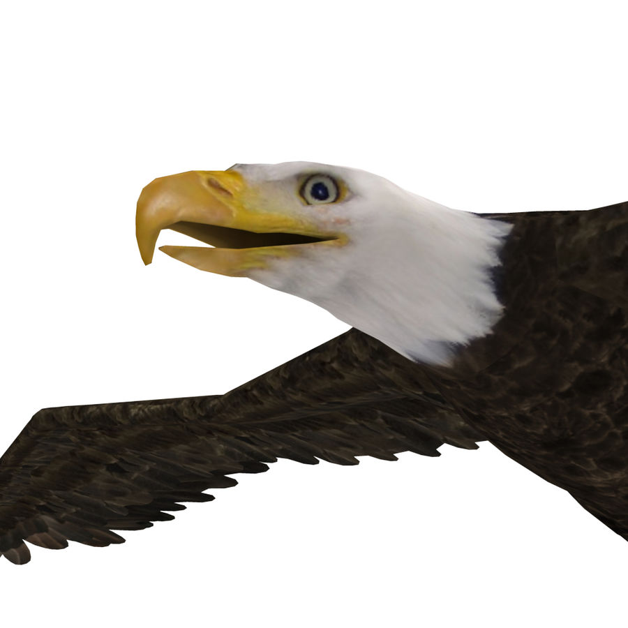 Eagle royalty-free 3d model - Preview no. 6