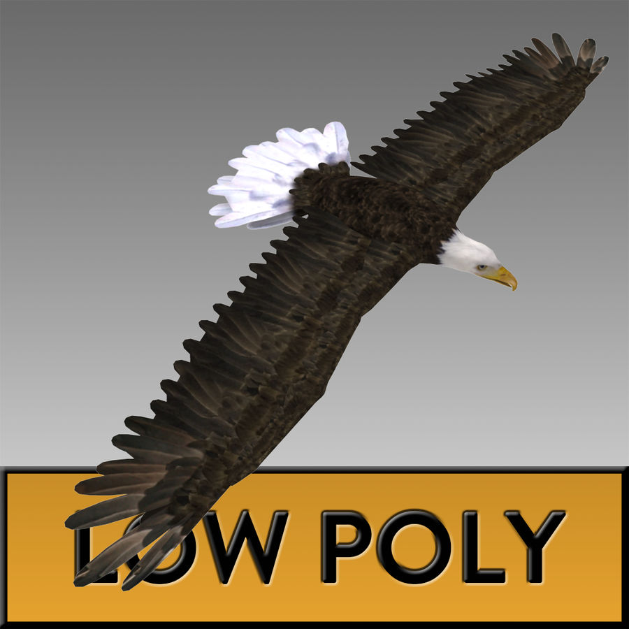 Eagle royalty-free 3d model - Preview no. 1