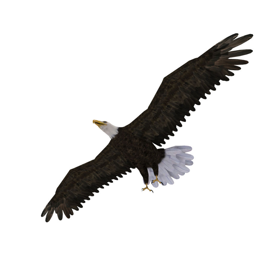 Eagle royalty-free 3d model - Preview no. 4