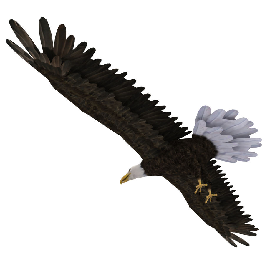 Eagle royalty-free 3d model - Preview no. 26