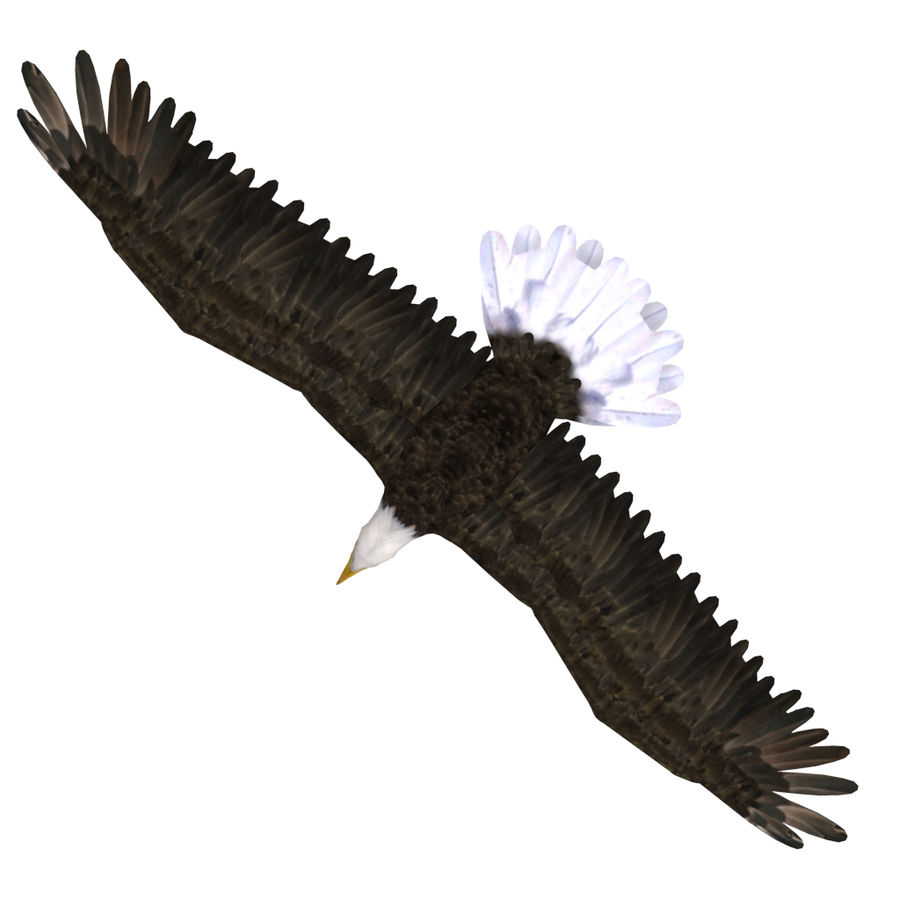 Eagle royalty-free 3d model - Preview no. 22