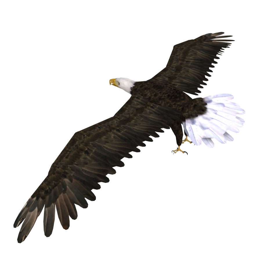 Eagle royalty-free 3d model - Preview no. 24