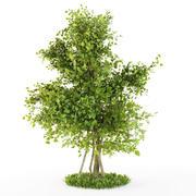 Buissons plexus 3d model