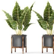 Bitki saksısı 3d model